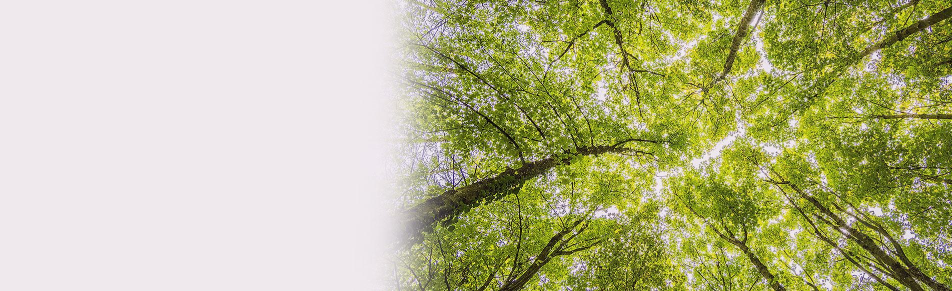 Sondage <br />'Les Français, l'Environnement <br />& la Convention Citoyenne :